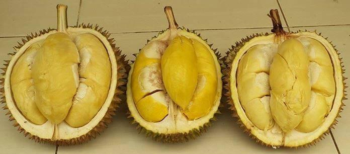 Durian Banten