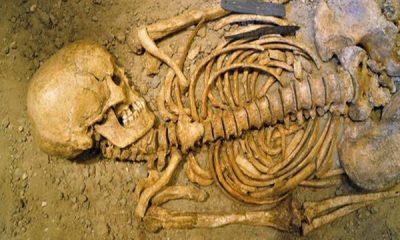 penemuan tulang