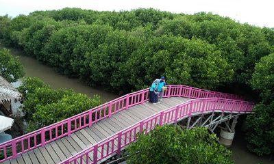 taman hutan mangrove