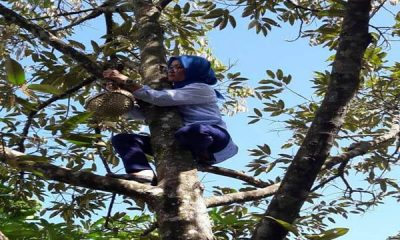 Buati Lebak Iti Octavia Jayabaya Panjat Pohon Durian. Fakrab sebut kondisi Lebak sama dengan pedalaman papua, yakni kabupaten Yakuhimo