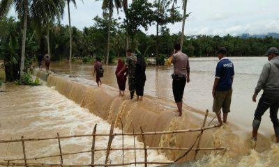 Padi Terendam Banjir