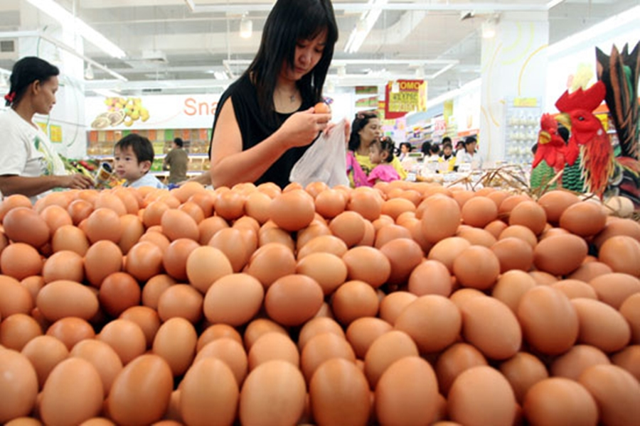 Telur Palsu