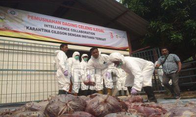 Daging Celeng Dimusnahkan BKP Cilegon