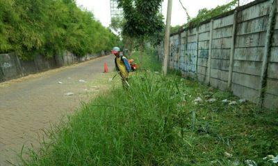 Perjaka Gesit Bersihkan Rumput