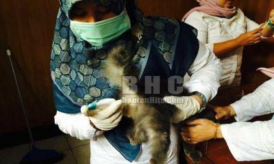 Vaksin Hewan Peliharaan