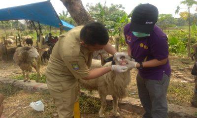 Hewan Kurban di Kota Tangerang
