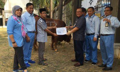 Direktur HR & GA PT KRAKATAU POSCO, Andi Soko Setiabudi, Beserta Jajaran Direksi saat serah terima hewan kurban di Mesjid Agung Nurul Ikhlas Cilegon,