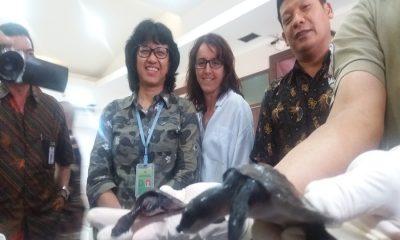 Penyelundupan Kura-kura Moncong Babi
