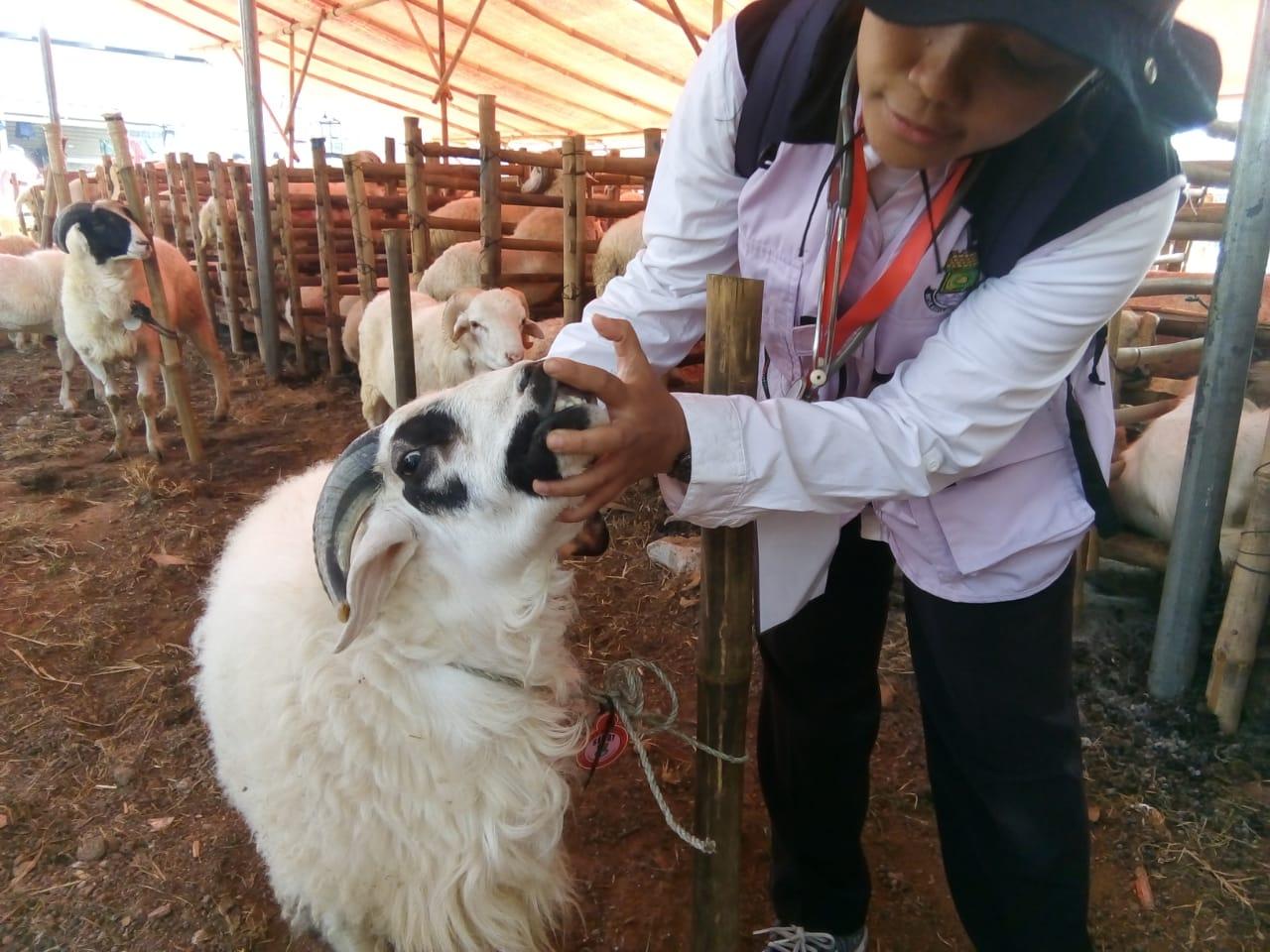 Pemkab Tangerang Imbau Warga Beli Hewan Kurban Berlabel