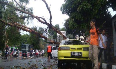 Pohon Tumbang di Alun-alun Pandeglang Menimpa Mobil dan Motor