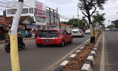 Pohon di Kota Tangerang dicat supaya dapat adipura. Caleg tak boleh pasang APK di pohon