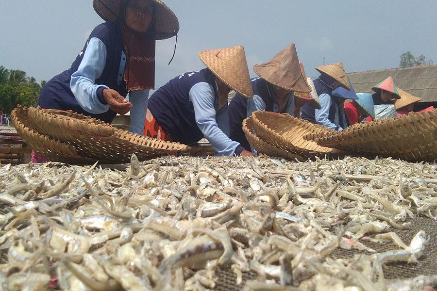 Sentra Pengolahan Ikan Asin di Kecamatan Sumur