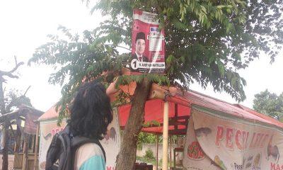 Caleg pasang poster di Pohon