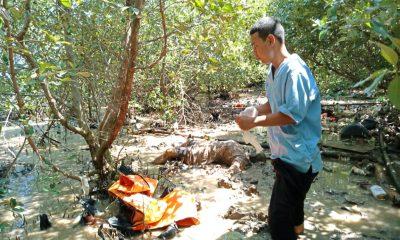 Mayat perempuan ditemukan di Hutan Mangrove Sungai Cengkok