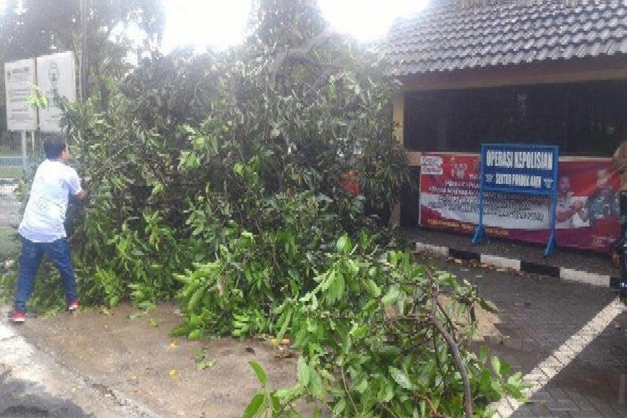 Pohon tumbang di Tangsel timpa motor wartawan Jawa Pos TV