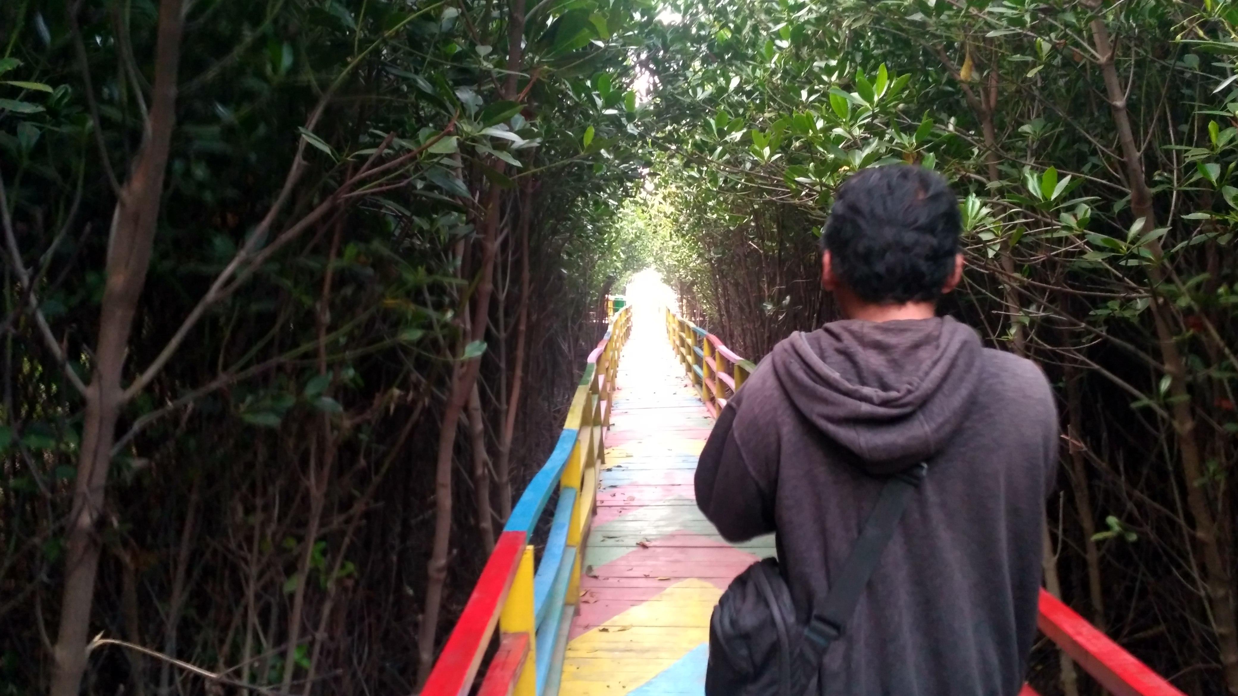 Dulunya Wilayah Abrasi, Jembatan Pelangi di Tengah Hutan Mangrove Desa Lontar Kini Jadi Spot Selfie